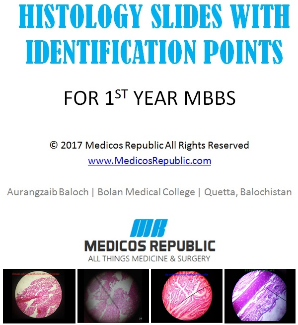Histology Slides With Identification Points for 1st & 2nd Year MBBS | Medicos Republic