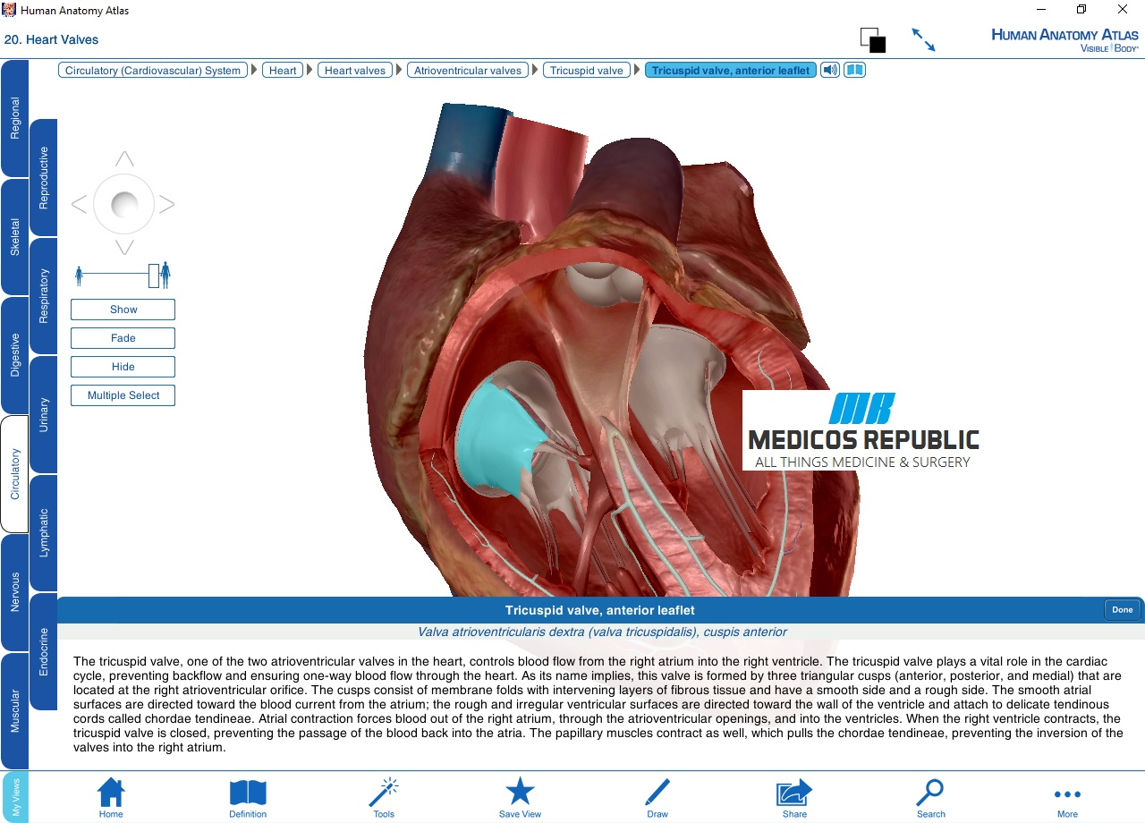 Atlas of human cardiac anatomy