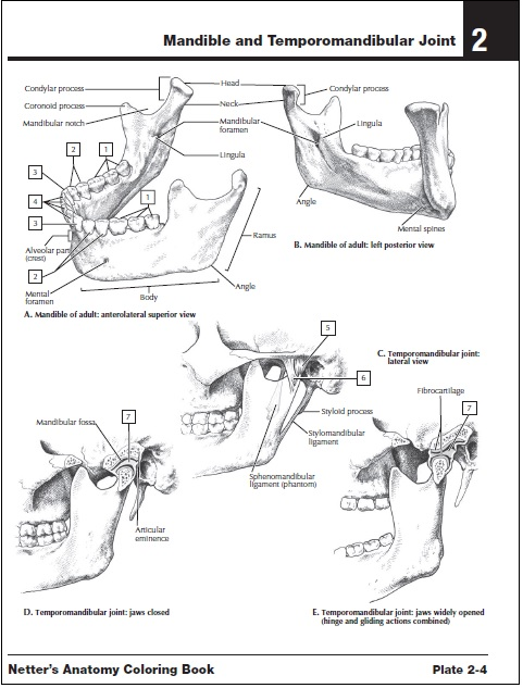 Screenshots Of Netters Anatomy Coloring Book PDF