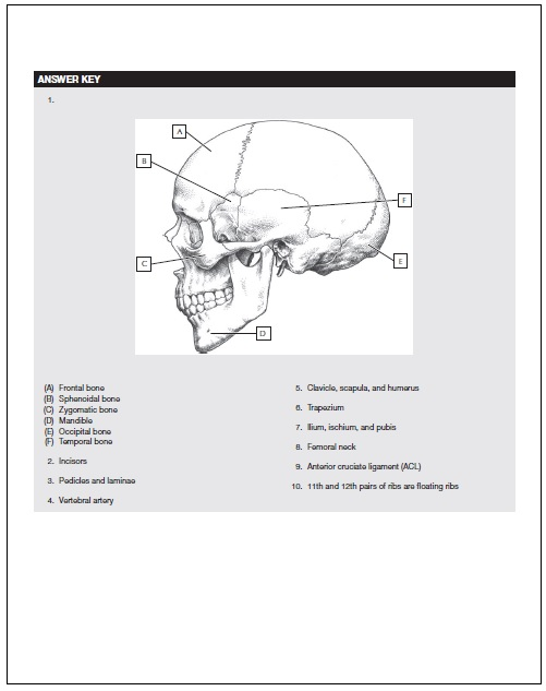 Table Of Contents Below Is The Offered Inside Netters Anatomy Coloring Book