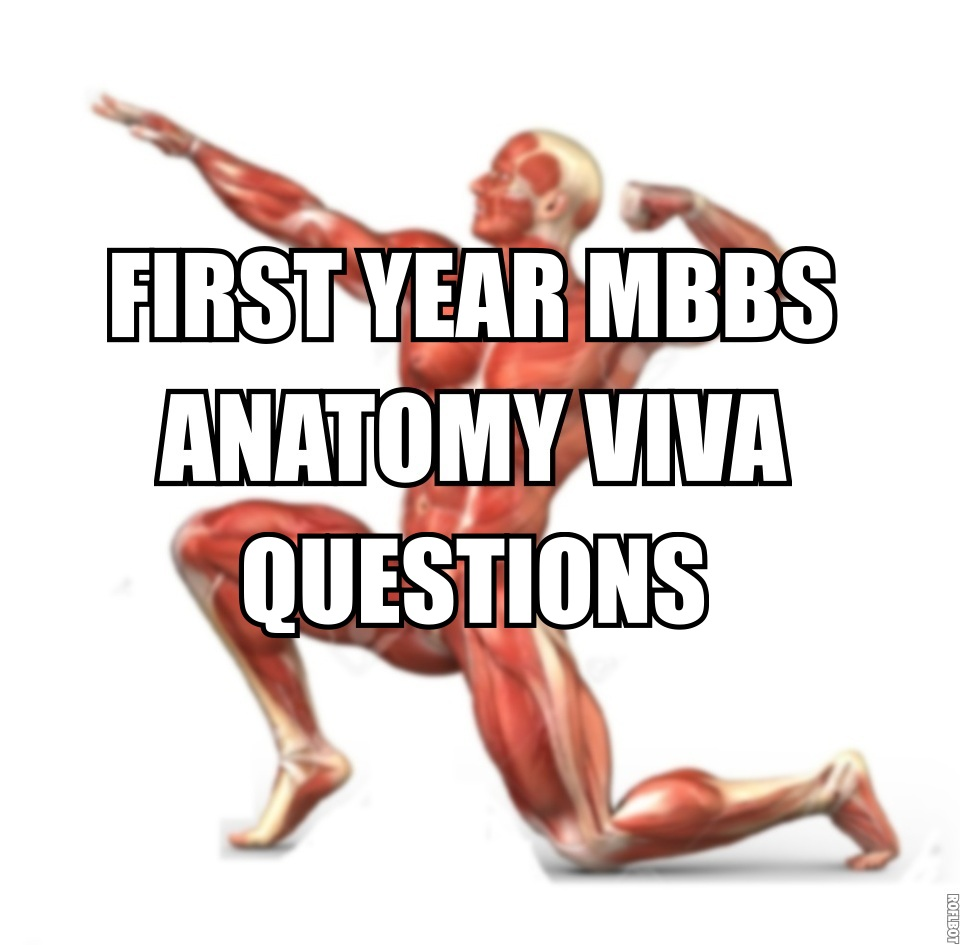 Anatomy Stage/Prof/Exam Viva Questions for 1st Year MBBS | Medicos ...