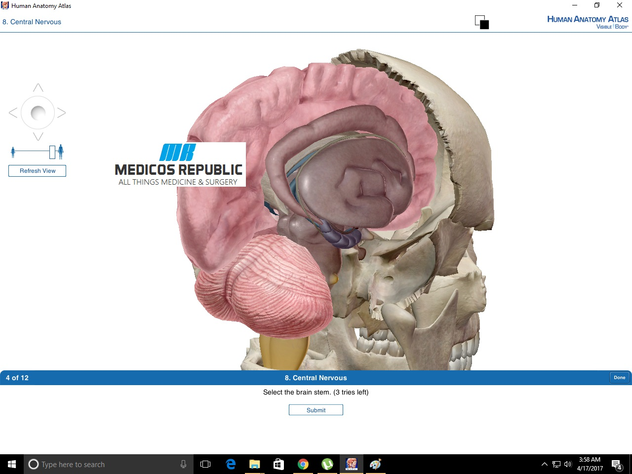 Colorful Human Brain Anatomy Atlas Ensign - Anatomy and Physiology ...
