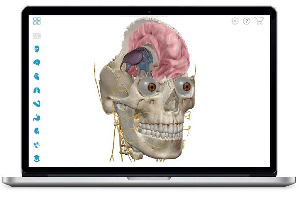 Shareware visible body 3d human anatomy atlas at download.