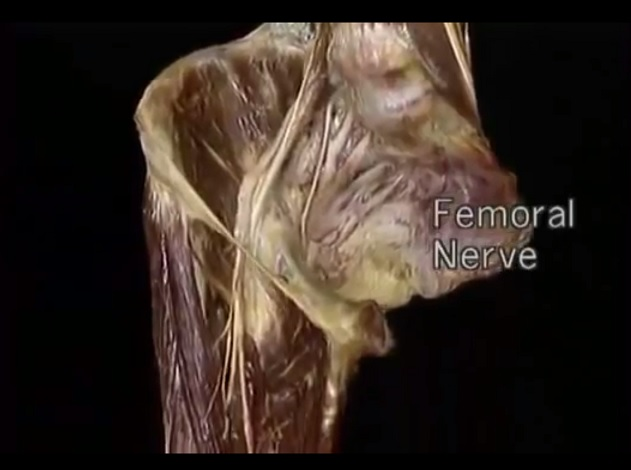 Anatomy dissection videos free download