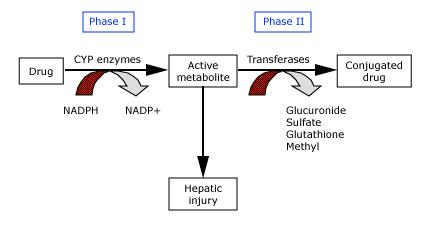 Drug Induced Hepatitis Mnemonics