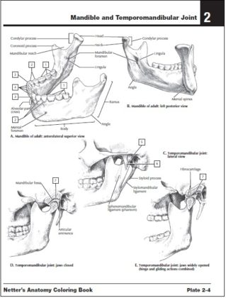 Netter's Anatomy Coloring Book PDF Free Download Direct Link
