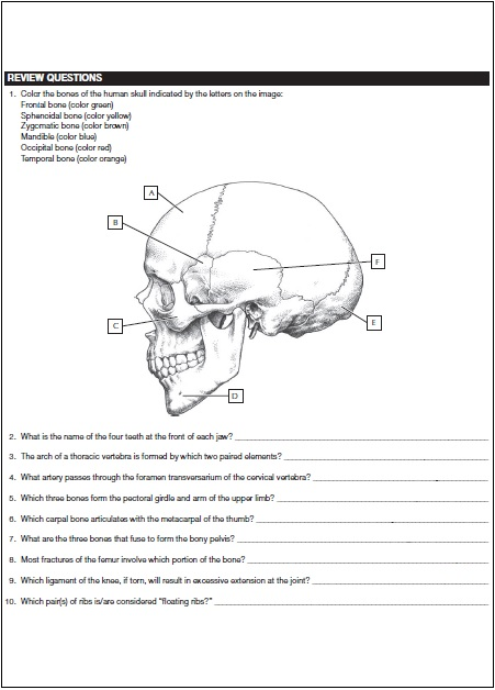 Netters Anatomy Coloring Book PDF Screenshot 2