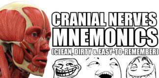 Cranial Nerves Mnemonics