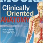 Moore's Clinically Oriented Anatomy 7th Edition