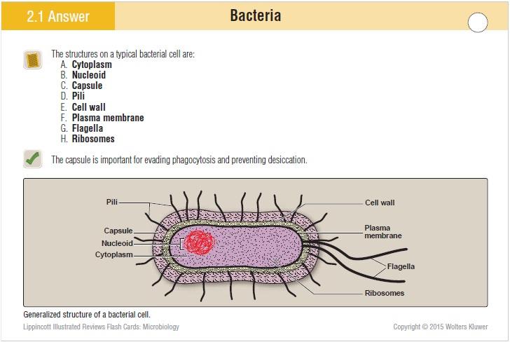 Microbiology Flash cards PDF