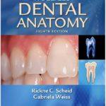 Woelfel's Dental Anatomy PDF