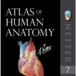 Netter's Atlas of Human Anatomy 7th Edition PDF