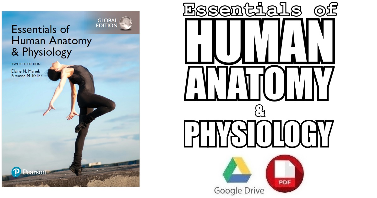 Essentials of Human Anatomy & Physiology 12th Edition PDF