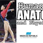 Human Anatomy & Physiology 11th Edition PDF