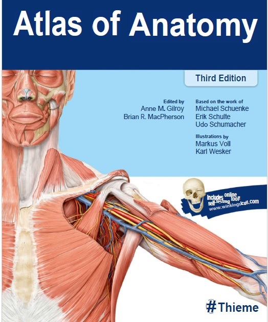 Thieme Atlas Of Anatomy 3rd Edition Pdf Free Download Direct Link