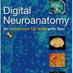 Digital Neuroanatomy 1st Edition PDF