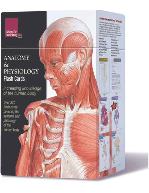Anatomy & Physiology Flash Cards PDF